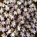 Bomboniere orsetto animali kawaii bambini battesimo - nascita - babyhower - comunione, personalizzate in fimo